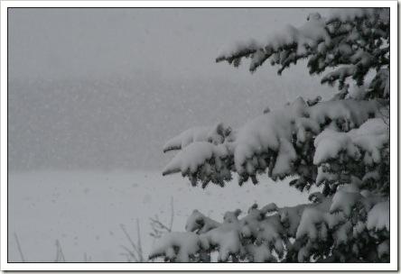 snow21808a