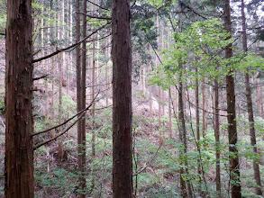 平行に林道