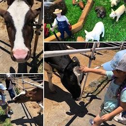 Augusta Milk Farm 相澤良牧場 (オーガスタ・ミルクファーム)