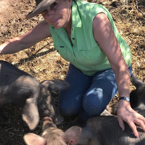 Free Range Pig Farm Wagga Wagga NSW