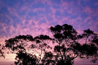 Photo: Purple sky