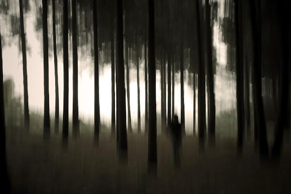 L'uomo del bosco di Picone Marco Flavio
