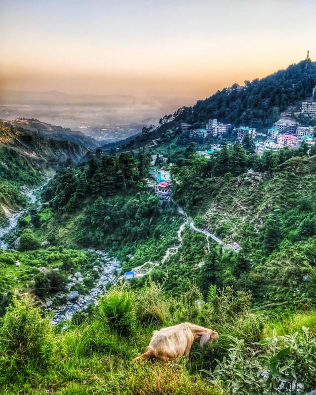 goat+grazing+himalayas+bhagsunag+beautiful+villages+in+himachal+pradesh+india