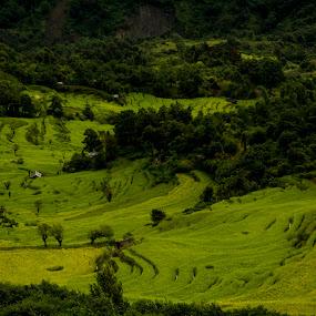 terrace farming at Ukhrul, Manipur by Priyojit Singh Akoijam - Landscapes Prairies, Meadows & Fields