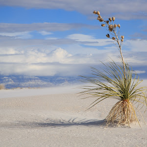 White Sands National Monument 3.jpg