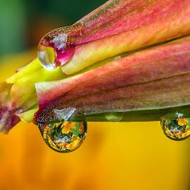 by Thomas Thain - Nature Up Close Natural Waterdrops