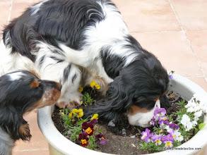 Photo: Eh Jude des deux Camélias jardine