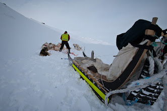 Photo: Sorting the lines for the dogs which has to be done once in a while, to maintain the flexible structure of the pack.The black board attached to the back of the sled is a break pad, used by the sled driver to break the sled when decending hills, avoiding it crashing into the dogs from behind.