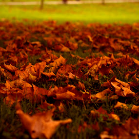 Autumn by Nicolau Flavius-Alin - Nature Up Close Leaves & Grasses