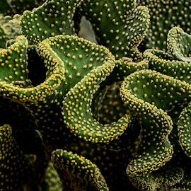 Cactus I by Jomabesa Jmb - Nature Up Close Other plants ( naturaleza, jardin, bontanico,  )