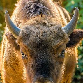 by Leo Ramli - Animals Other Mammals (  )