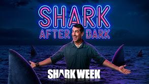 Shark After Dark thumbnail