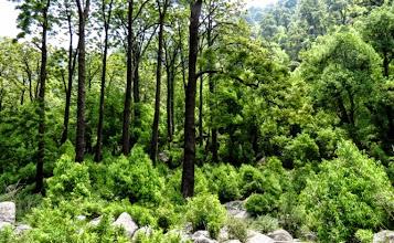 Photo: Handi Forest view