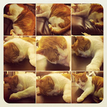 Photo: Cat sleeping ritual #intercer #cat #pet #cats #pets #sleep #sleeping #meow #petsofinstagram #beautiful #cute #cutie #animal #picpets #sweet #kitty #kitten #catlovers #portrait #pretty #funny #paws #fur #catsofinstagram #bed #dream - via Instagram, http://instagr.am/p/Ra-OGcJfoO/