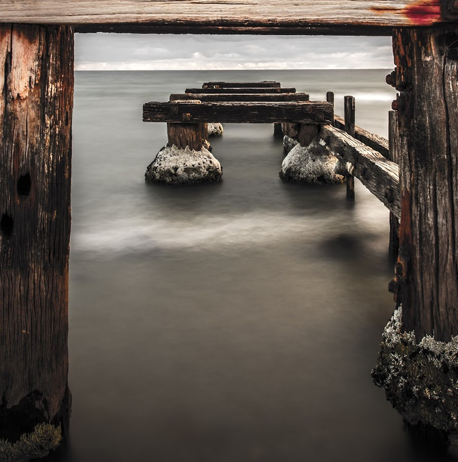 Old wood by Alan Wright - Landscapes Waterscapes
