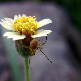Spider Near Flower by Brq A - Instagram & Mobile Other