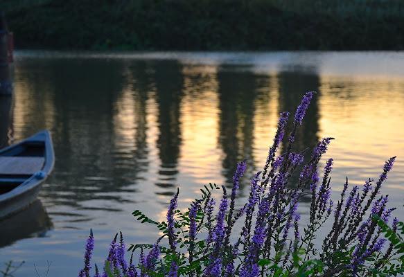 Fiori viola affacciati sul fiume di Max66