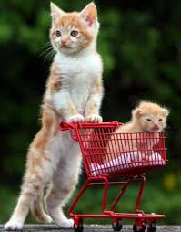 Cat walking kitten in shopping cart