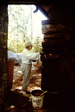 Photo: Lorraine staining cabin.