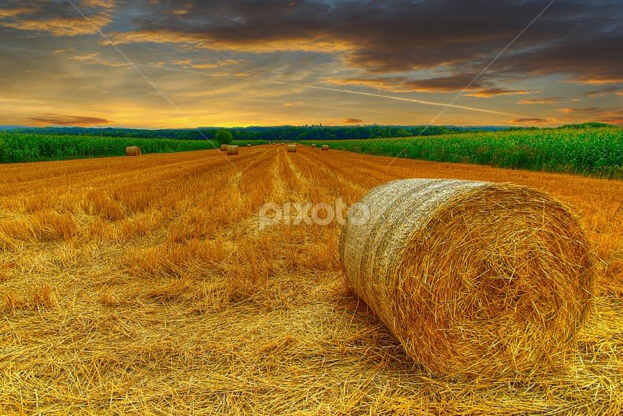 The field at dawn by Boris Frković - Landscapes Prairies, Meadows & Fields ( ravindu shanilka )