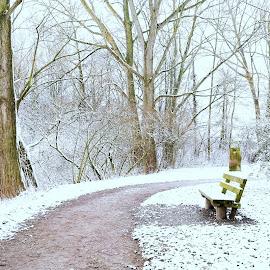 Snowy Path by Abhinav Ganorkar - City,  Street & Park  City Parks ( winter, bench, park, snow, lake,  )