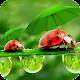 Download Umbrella Wallpaper For PC Windows and Mac