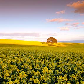 dave_holdham_landscape_may_wales_uk_jpg..jpg