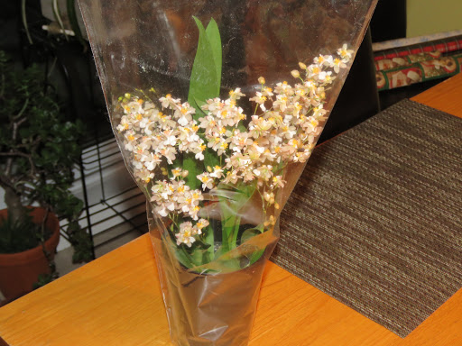 Les orchidées de Grigri - Page 3 TwLb-zVqyP1tSCMdAsybYX4S2LFZNbHEg8fmghMkvKc_yvaWsVURV5IG_A0OdQPJd4-YfZ2-hyFNycKMALO3ddyG1igcg67xfogjLEgOefrvLMQzO1OlAWkf2ljT6-KZoXodWDU5tGY