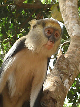 Photo: wildlife, Ghana