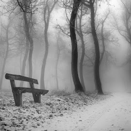 Woods with a twist by Robert Fenyo - Black & White Landscapes ( winter, black and white, forest, surreal, woods )