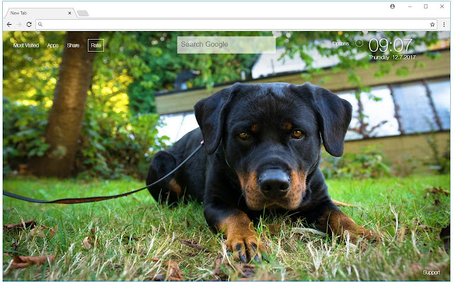 Rottweiler Wallpaper Cute Dogs New Tab Themes