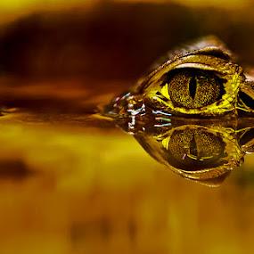 by Dmitry Samsonov - Animals Reptiles