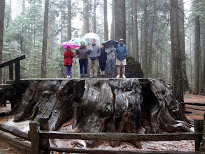 Photo: On the drive home on Friday we stopped by Calaveras Big Trees Park to see the Giant Sequoias
