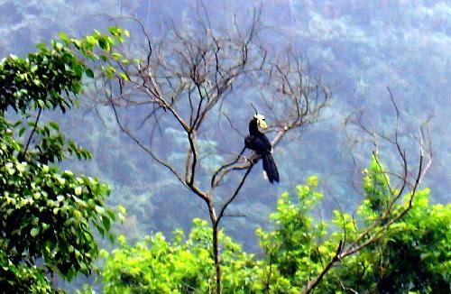Khu du lịch Tràng An, ngắm chim phượng hoàng đất