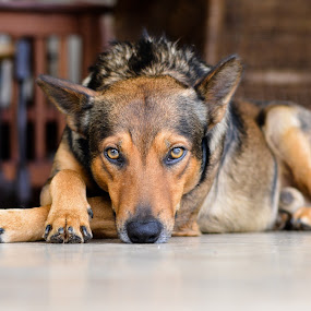 Mutambo by Marc Crowther - Animals - Dogs Portraits ( , dog, mutt, pet, pwc84 )