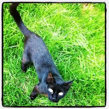 Photo: Pet portrait #black #cat #pet #intercer #romania - via Instagram, http://instagr.am/p/MC4c3WJfuc/