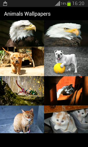動物の壁紙