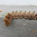 Caterpillar with video