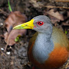 Chiricote (Grey-necked wood rail)