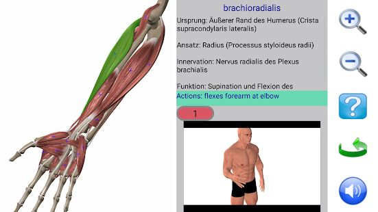 Visual Anatomy – Apps bei Google Play