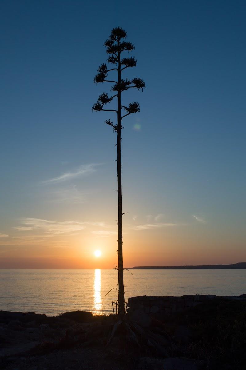 Uno al tramonto di Massi82