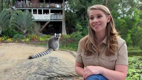 Bindi's Lemur Island thumbnail