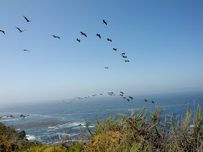 Photo: Lots of pelicans flying by throughout the trip - this was my best shot of them
