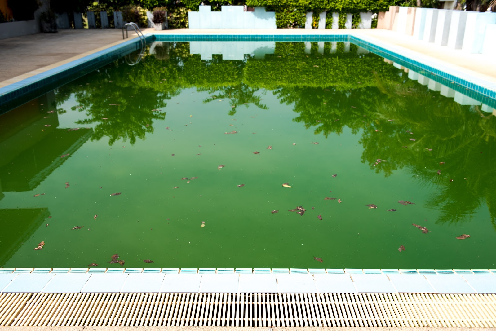 an inground swimming pool with green water and brown leaves in it
