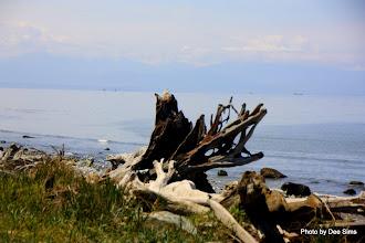 Photo: (Year 2) Day 336 - Drift Wood on West Beach