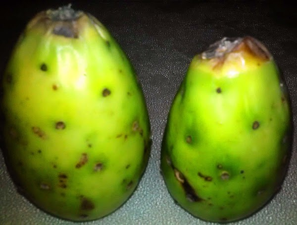 To prepare a prickly pear, either sand the outside of the pear or if...