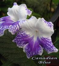 Photo: Canadian Blue