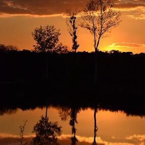 Double beauty by Vanja Vidaković - Novices Only Landscapes ( sunset, beautiful, 2012, trees, river,  )