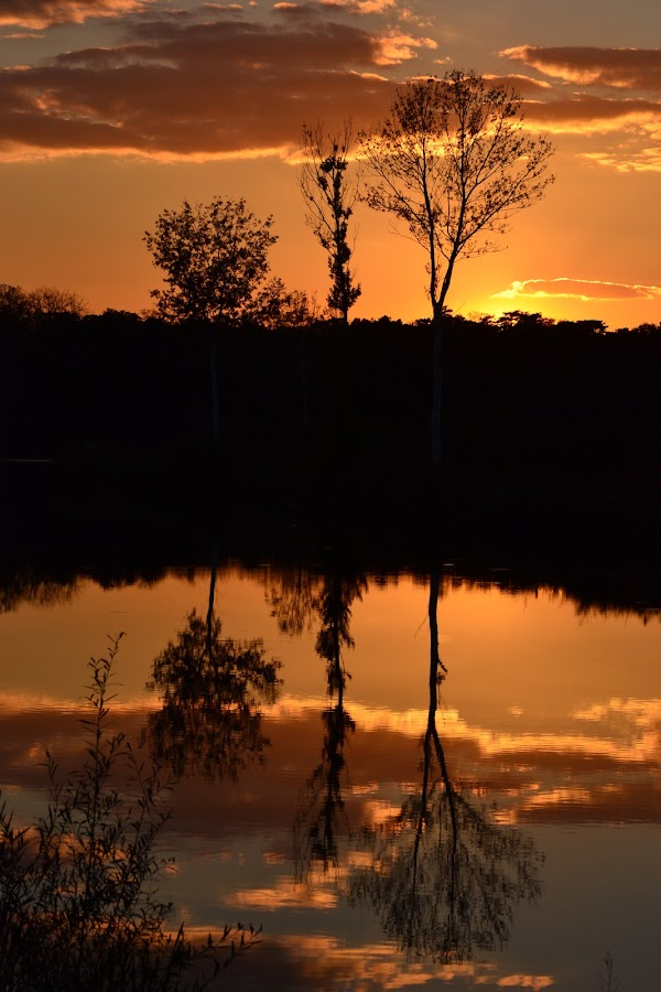 Double beauty by Vanja Vidaković - Novices Only Landscapes ( sunset, beautiful, 2012, trees, river,  )