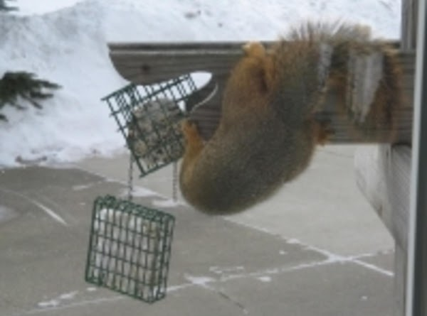 Freddy The Squirrel's Favorite Mix Recipe